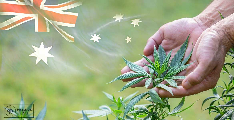 hemp-farming-in-australia-examining-australias-practices