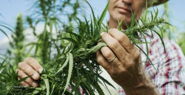 the-environmental-benefits-of-growing-hemp